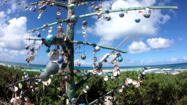 cozumel beach. lonely tree - yucatan peninsula stock videos and b-roll footage