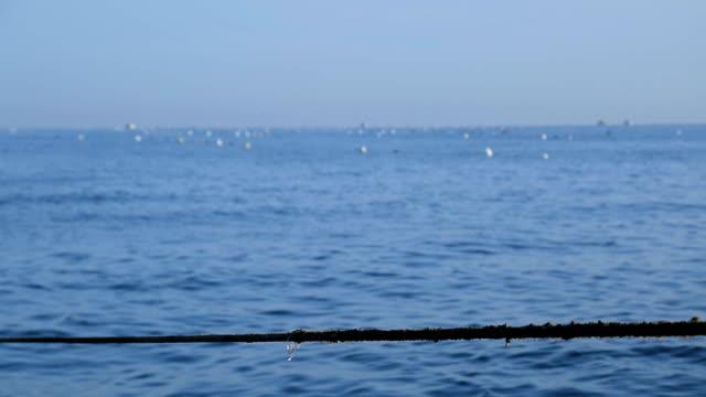 ムール貝の繁殖 - ムール貝点の映像素材/bロール