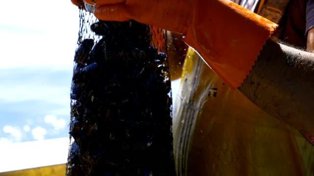 cozze appena pescate - ムール貝点の映像素材/bロール
