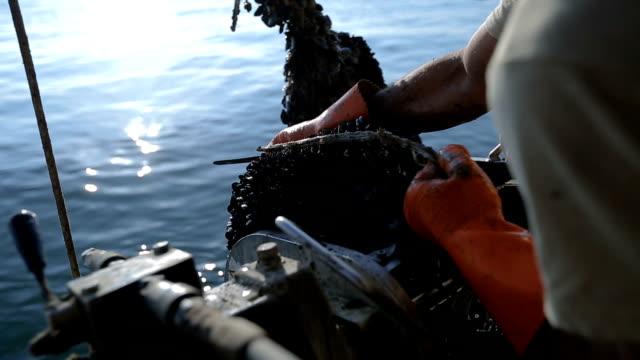 新鮮なムール貝 - ムール貝点の映像素材/bロール