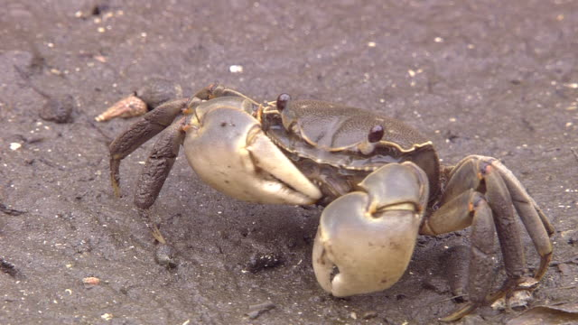 a crab at feeding - crab stock videos & royalty-free footage