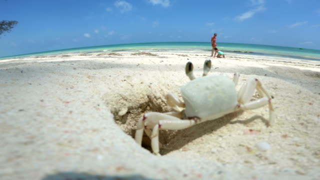 crab coming out of his hole while mother and daughter are playing on beach - foro video stock e b–roll