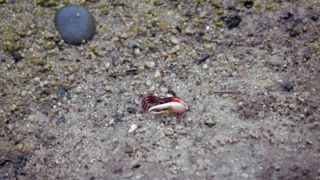 crab eating slow motion
