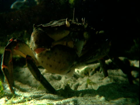a crab eats on the ocean floor. - crab stock videos & royalty-free footage