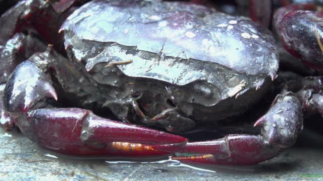 vidéos et rushes de oeil de crabe - oeil d'animal