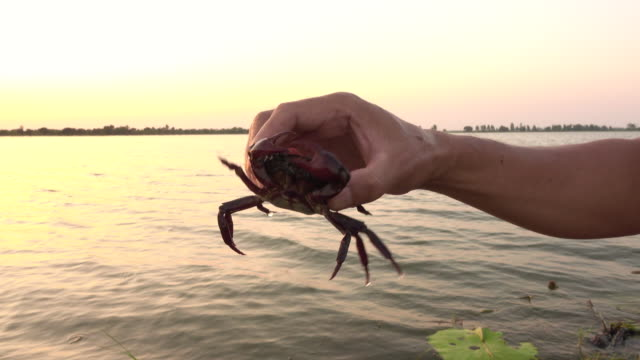 crab in a hand - crab stock videos & royalty-free footage