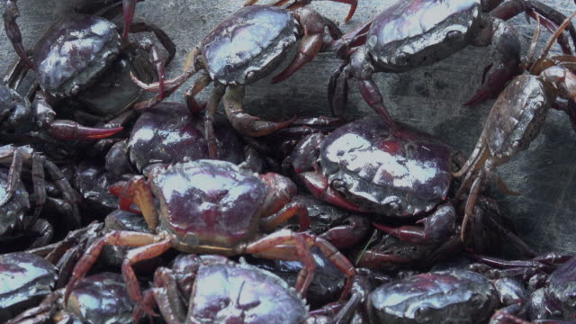 crab in basket - brown stock videos & royalty-free footage