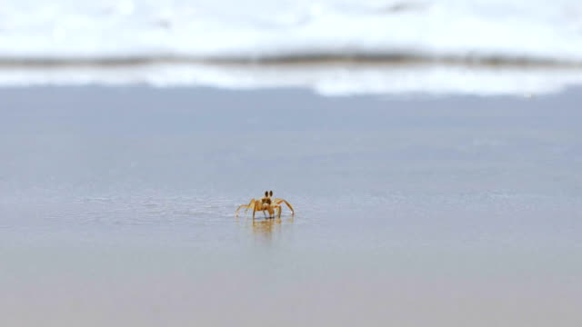 crab on a beach slow motion - crab stock videos & royalty-free footage