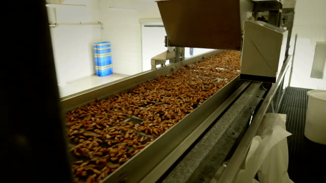 a crab sorting machine sorts north sea shrimps. - food processing plant stock videos and b-roll footage