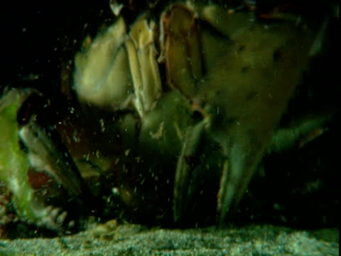 a crab stirs up sand on the ocean floor. - crab stock videos & royalty-free footage