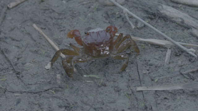 crab - crab stock videos & royalty-free footage