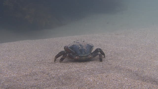 crab - crab stock videos and b-roll footage