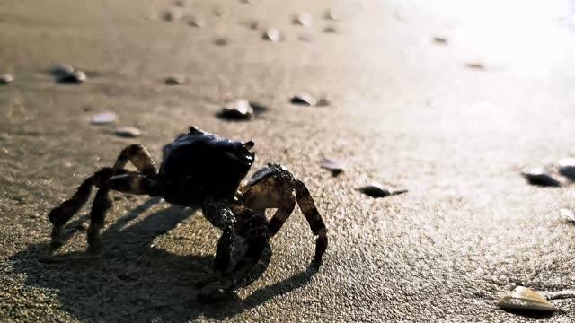 蟹 - カニ点の映像素材/bロール