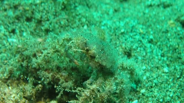 crab - ヨウジウオ科点の映像素材/bロール
