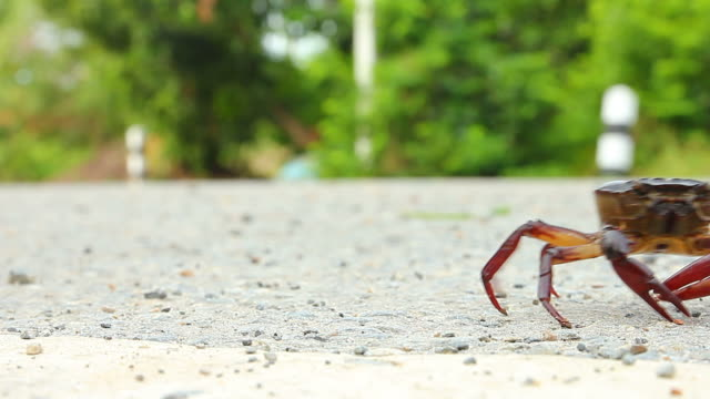 Crab walking on the road