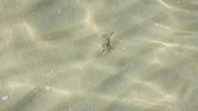 Crab walking on the sea bottom