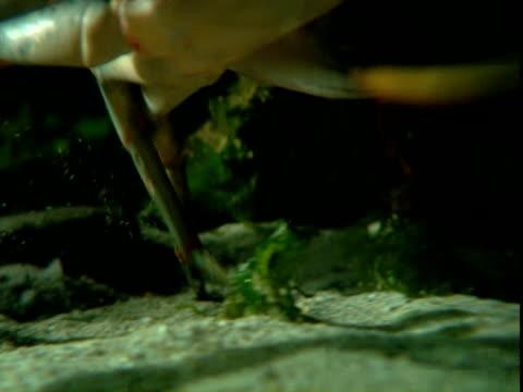 a crab walks across a sandy ocean floor. - crab stock videos & royalty-free footage