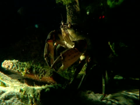 a crab walks across the ocean floor while moving its mouth. - crab stock videos & royalty-free footage