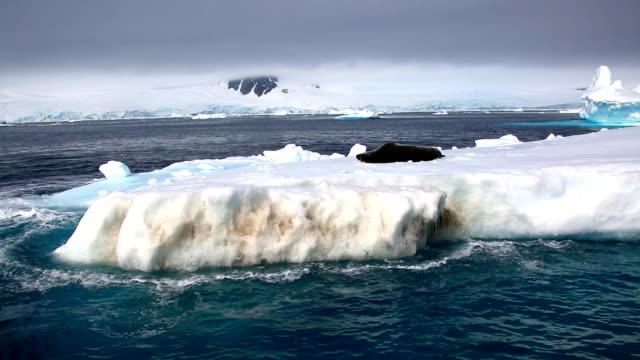 Crabeater seal on ice floe