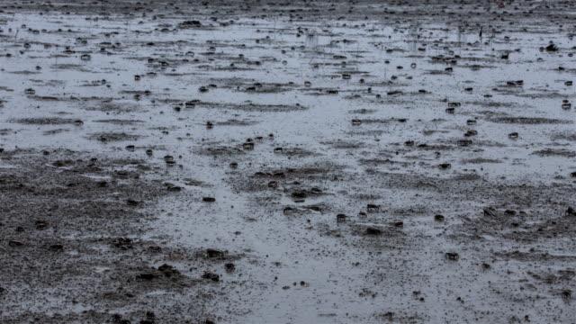 crabs crawling on mud / jeollanam-do, south korea - mud flat stock videos & royalty-free footage