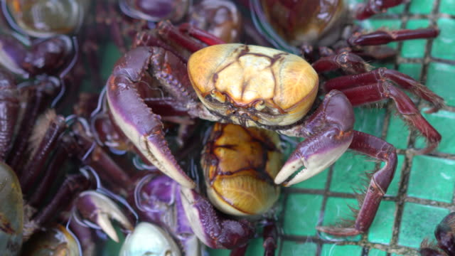 crabs for sale in the restaurant - animals in captivity stock videos & royalty-free footage