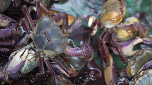 crabs in captivity - animals in captivity stock videos & royalty-free footage