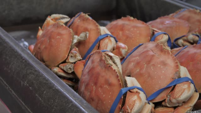 crabs in fisherman's wharf restaurant, san francisco, california, united states of america, north america - fisherman's wharf san francisco stock videos & royalty-free footage