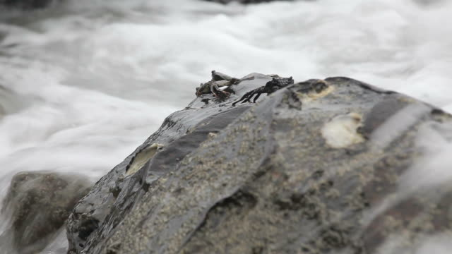 crabs on the rocks in Sea shore