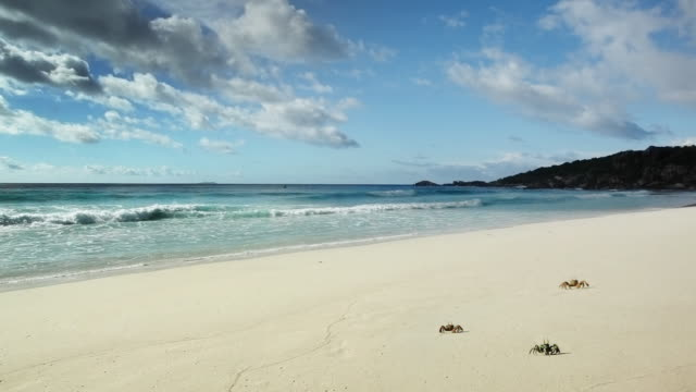 crabs - ekoturism bildbanksvideor och videomaterial från bakom kulisserna