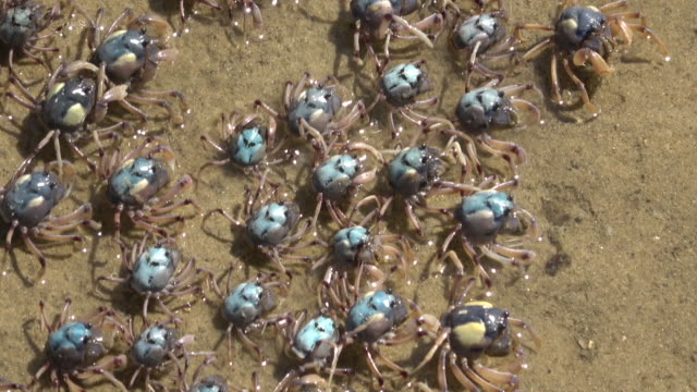 crabs - crustacean stock videos & royalty-free footage