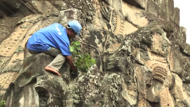 crack team of gardeners ensures the kingdom's most valued heritage site, the archaeological marvel angkor wat, is not strangled by overgrown tree... - sandstone stock videos & royalty-free footage