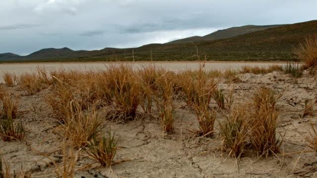 Cracked earth dry drought macro and brush 1 Alvord Desert Steens Mountain Near Malhuer Wildlife Refuge 2