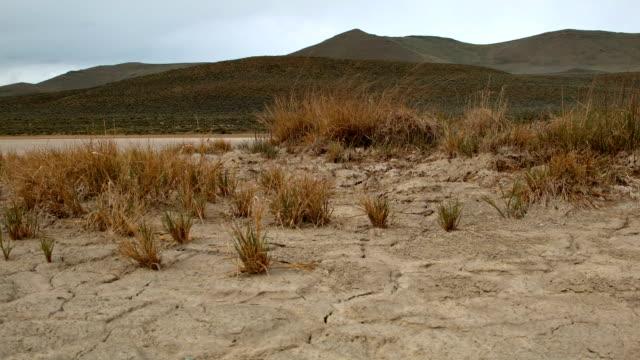 Cracked earth dry drought macro and brush 2 Alvord Desert Steens Mountain Near Malhuer Wildlife Refuge 3