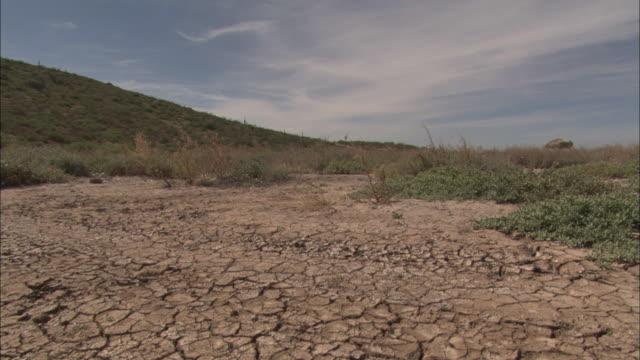 cracked earth shows evidence of drought. - バハカリフォルニア点の映像素材/bロール