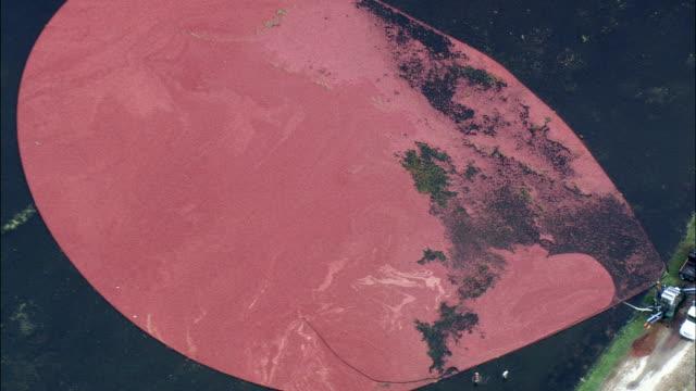 Cranberry-Felder - Luftbild - Massachusetts, Plymouth County, Vereinigte Staaten von Amerika
