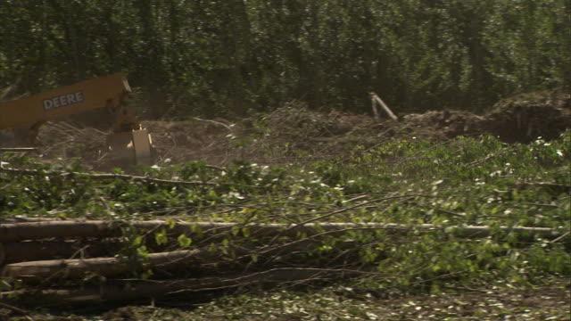 vidéos et rushes de a crane and an excavator move logs and branches. - pelleteuse