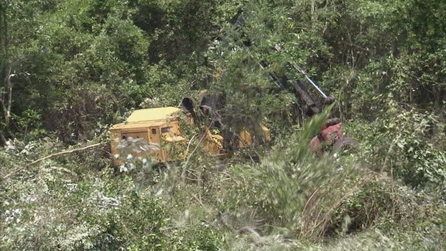 ms crane clearing swamp of trees / north carolina, usa - veicolo per costruzioni video stock e b–roll