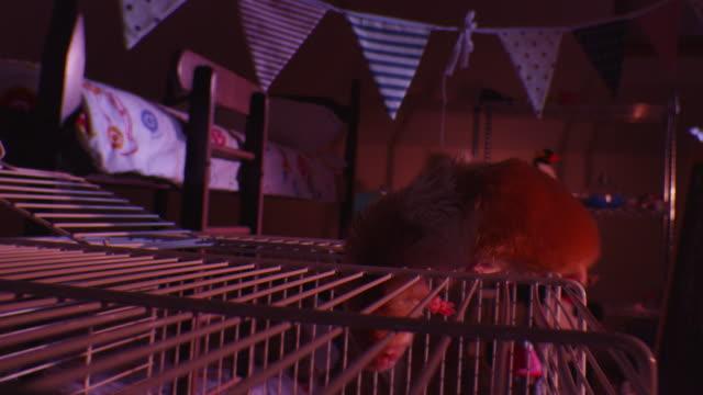 vídeos y material grabado en eventos de stock de crane down with pet syrian hamster climbing into cage from top in dark bedroom - vibrisas