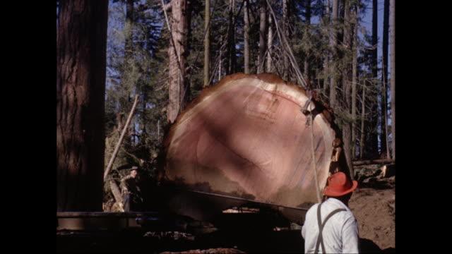 vídeos y material grabado en eventos de stock de ws pan crane loading redwood trunk in pallet / united states - leñador