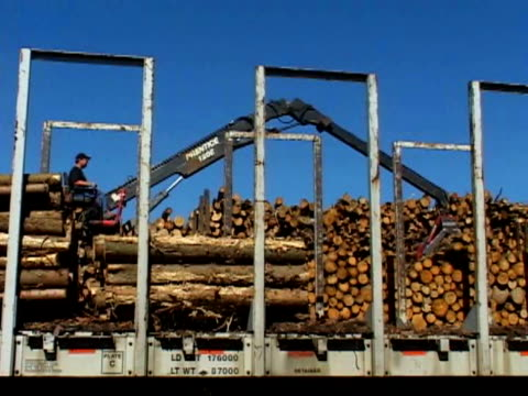 crane moving logs - one mid adult man only stock videos & royalty-free footage
