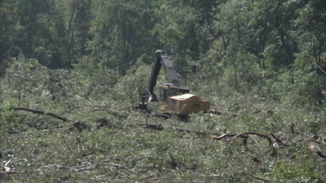 ws zo crane moving to reveal clearing trees / north carolina, usa - veicolo per costruzioni video stock e b–roll
