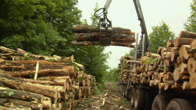 ms, pan, crane operator loading logs onto truck in forest, manistique, michigan, usa - industria forestale video stock e b–roll