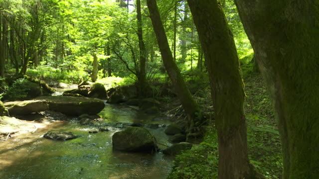 crane: rocky stream in forest - crane shot stock videos & royalty-free footage