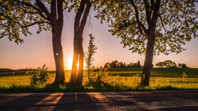 Crane: Rural landscape in warm evening light