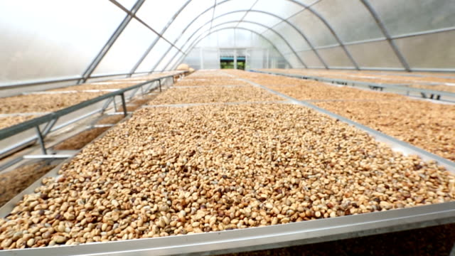 hd crane shot: coffee beans drying solar plantation house - drying stock videos and b-roll footage