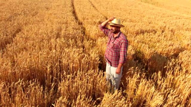 Plan grue: Agriculteur debout dans le champ de blé à la recherche de l'