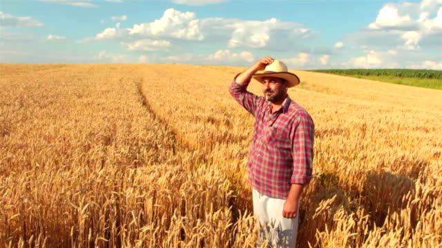 crane shot: farmer standing in the wheat field looking away - mid distance stock videos & royalty-free footage