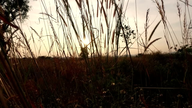crane shot : field with sunset - crane shot stock videos & royalty-free footage