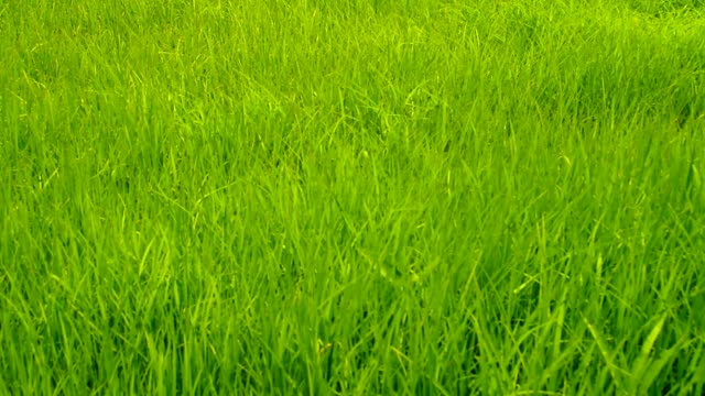 crane shot : grass field