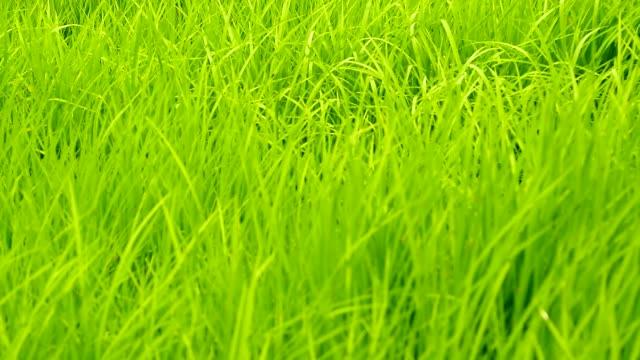 vídeos y material grabado en eventos de stock de crane shot: grass field - foco difuso